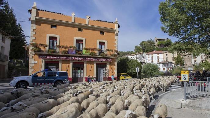 Més de 2.000 ovelles baixen de la muntanya de Seurí