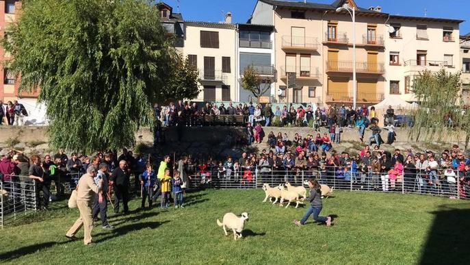 Sort promociona l'ovella xisqueta