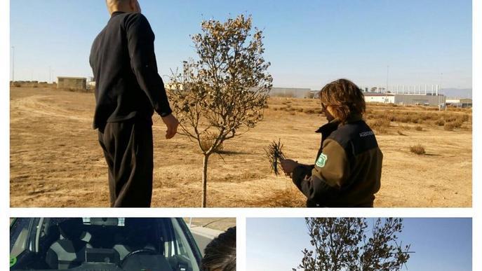 Denunciat per capturar ocells fringíl·lids a Agramunt