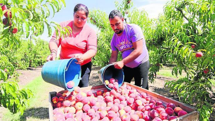 El sector de la fruita apressa per al 2018 a diversificar mercats exteriors