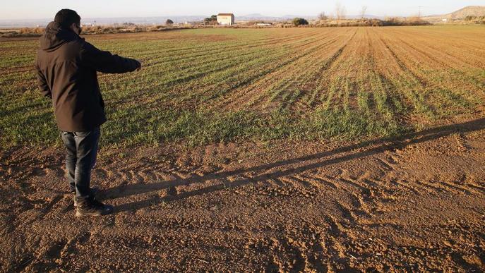 Problemes per a la producció de cereals a Lleida per la sequera