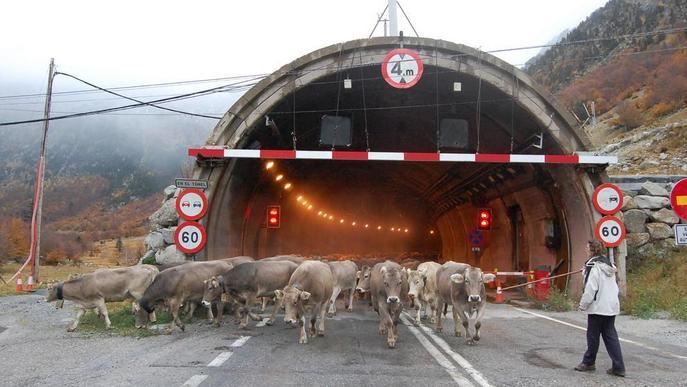 Reclamen obrir el vell túnel de Vielha a la transhumància