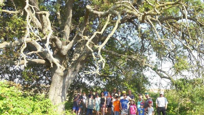 Impulsen un inventari d'arbres singulars de la Segarra