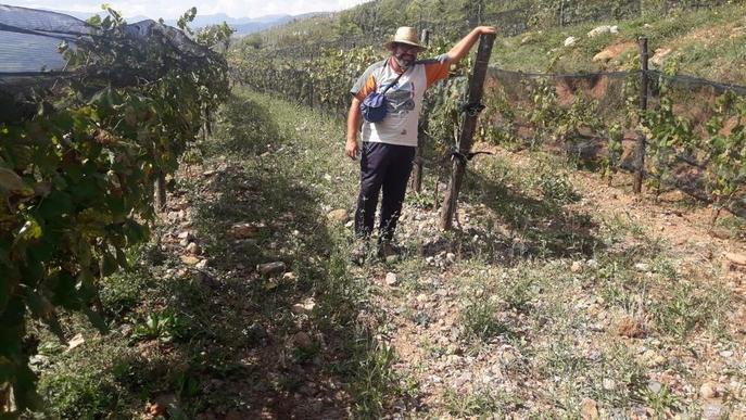 Primer vi procedent de vinyes al peu del Cadí-Moixeró