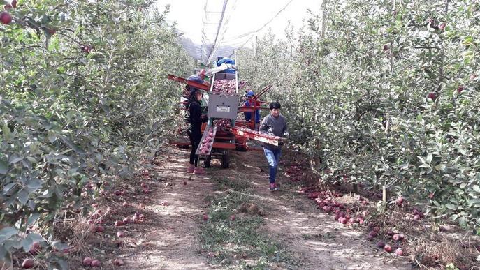 Fruits de Ponent ja recull pomes de muntanya