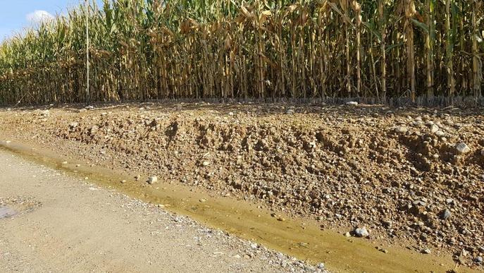 Les pluges impedeixen plantar alguns cereals i també collir el panís