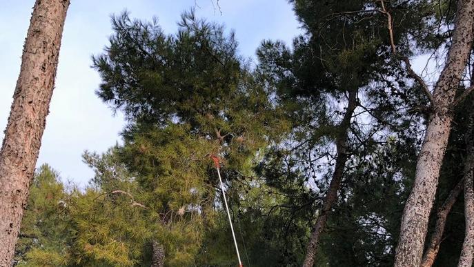 Retiren nius de processionària al parc de Santa Cecília