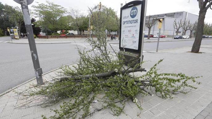 Retiren un arbre caigut enmig del carrer a Pardinyes