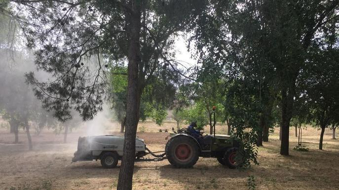Una plaga de mosquits obliga Fraga a fumigar espais públics