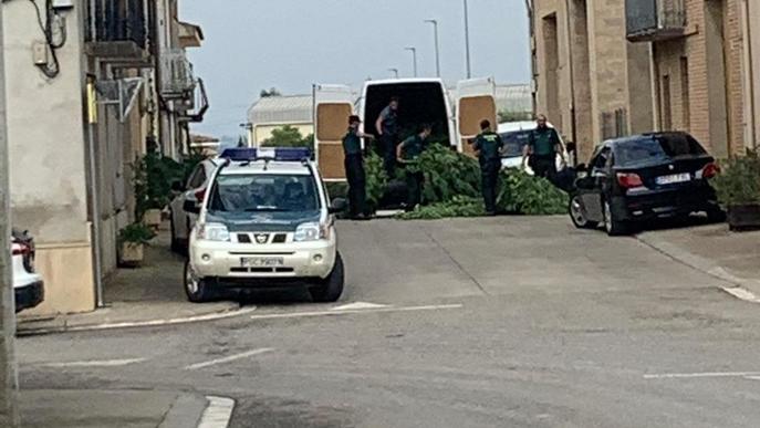 Cops policials contra el tràfic de marihuana a Bellvís i Alcarràs