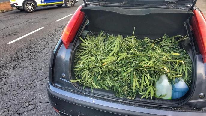 Sorprès amb 12 quilos de plantes de maria al cotxe