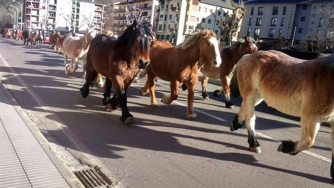 Cinquanta cavalls a la transhumància pel Sobirà