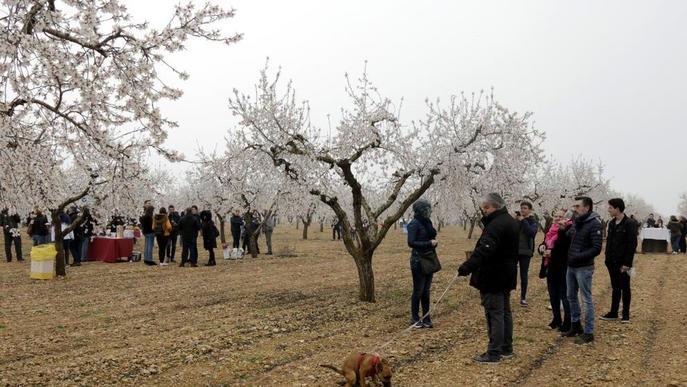 Visites a la floració en cinc pobles de les Garrigues