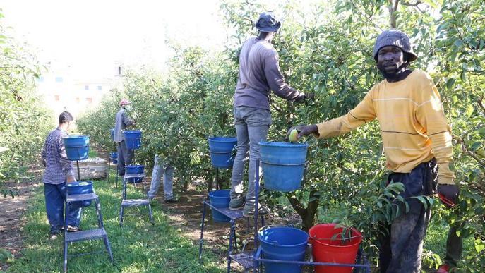 Borses de treball en marxa per buscar temporers per a la fruita