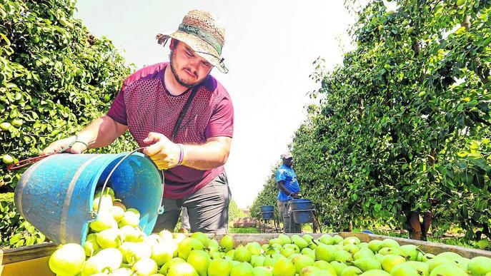 UP preveu millors preus en la campanya de fruita dolça