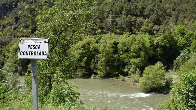 Demanen autoritzar la pesca als vedats dels rius Segre i Valira