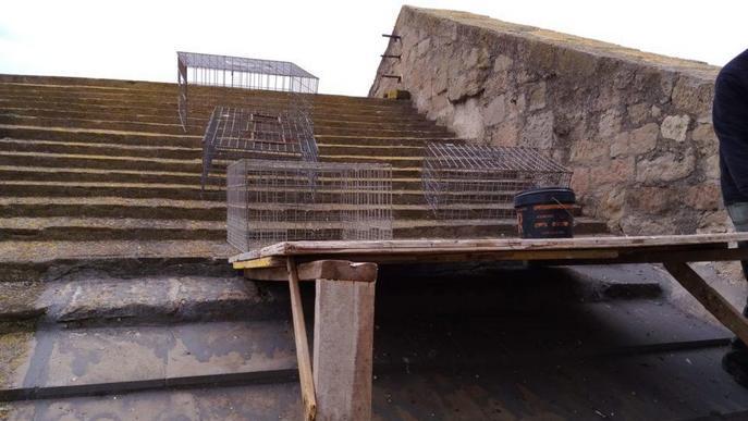 Agramunt instal·la gàbies per reduir la població de coloms