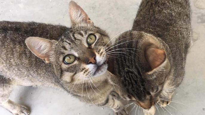 Campanya del Centre d'Acollida d'Animals per buscar voluntaris i rebatejar-lo