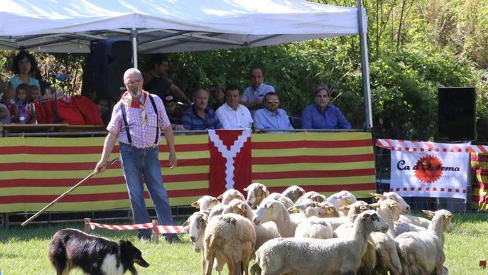 Suspenen el concurs de gossos d'atura de Llavorsí