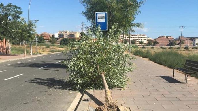 Busquen un xòfer per fer caure un arbre amb el cotxe a Alcarràs