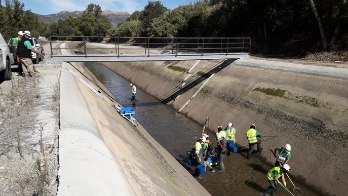 Endesa rescata peixos del canal de Balaguer abans de buidar-lo per obres