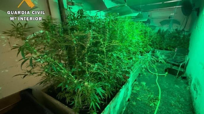 Tres detinguts i 280 plantes de marihuana decomissades a Fraga