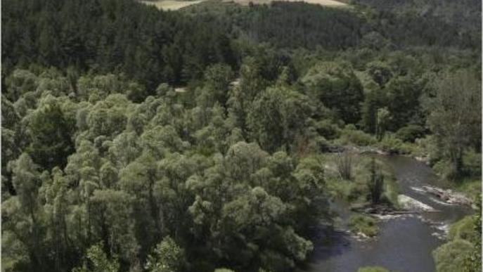 Els boscos del Pirineu produeixen ja fins a 250 quilos de bolets per hectàrea