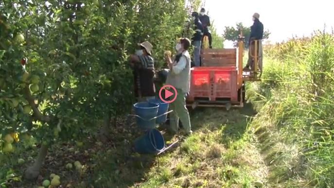 ⏯️ La fruita de pinyol assoleix el millor preu de comercialització dels darrers sis anys