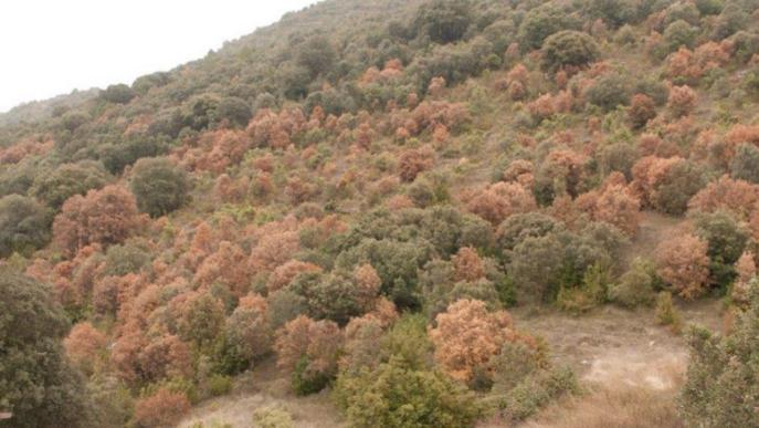 Els ecosistemes mediterranis s'escalfen un 20% més ràpid que la mitjana mundial
