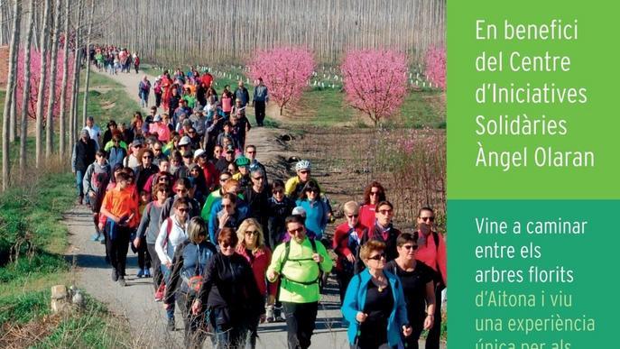 IX Caminada Popular d'Aitona