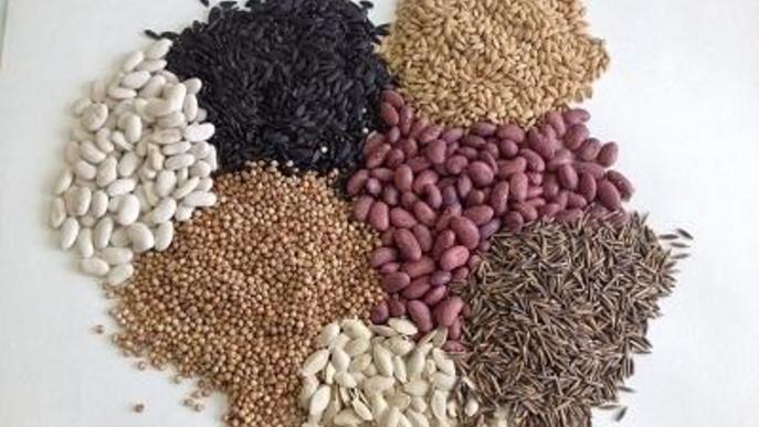 Agricultura alerta d'enviaments de llavors de països tercers no sol·licitades i demana no plantar-les