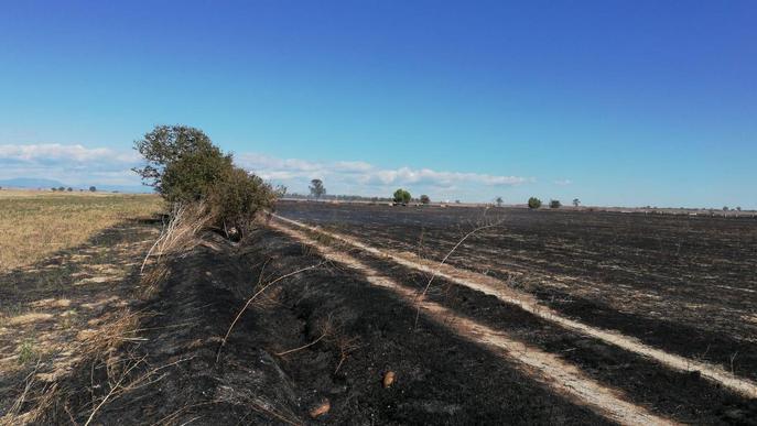 Cremen unes 13 hectàrees entre Belianes i Vilanova de Bellpuig