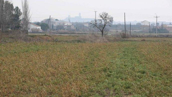 Unió de Pagesos demana a la Paeria que potenciï la venda directa i el consum de productes de proximitat de l'Horta
