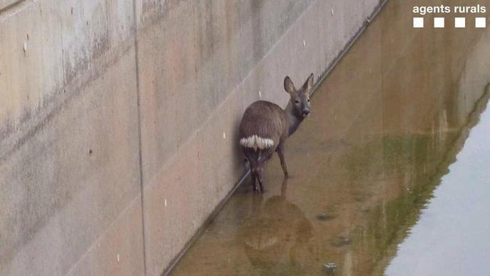 #FOTO   El confinament continua i la fauna segueix la seva vida