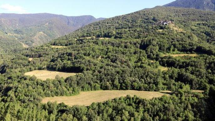 Paisatge de prats de dall a la Coma de Burg, dins el Parc Natural de l'Alt Pirineu, al Pallars Sobirà