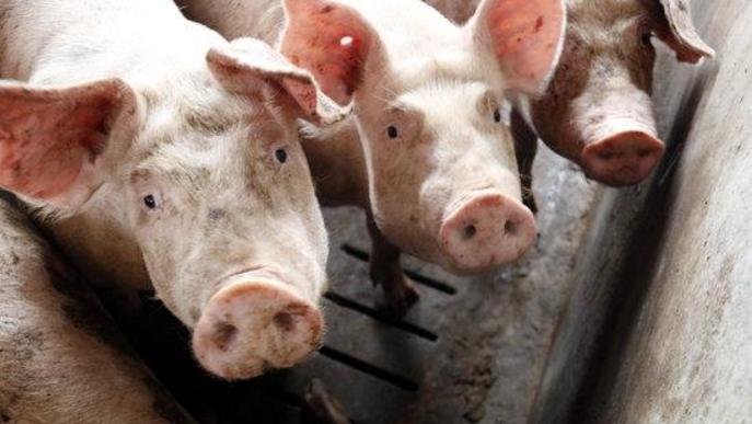 La renda agrària creix el 2019 un 5,4% a preus corrents, segons Agricultura