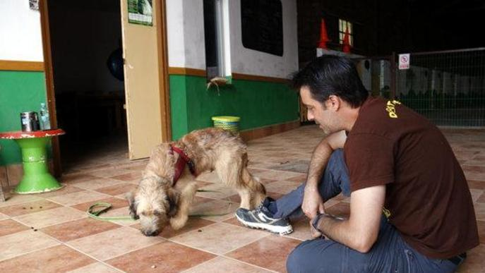 ⏯️ Allau de trucades a la protectora i augment de la demanda d'educadors canins