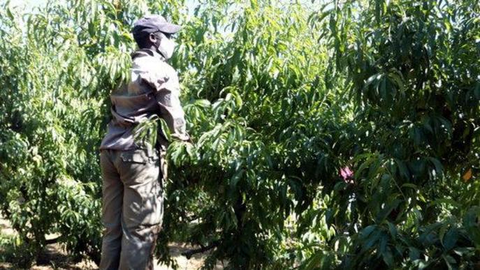 La UGT denuncia que el conveni agropecuari manté grups salarials per sota de l'SMI