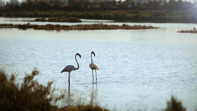 Dos flamencs al Món Natura Delta. Arxiu
