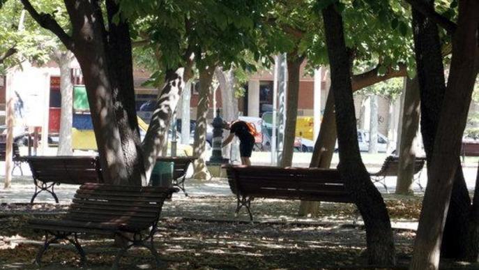 La plaça de les Magnòlies de Lleida, considerada un dels Refugis Climàtics de la ciutat per les seves ombres