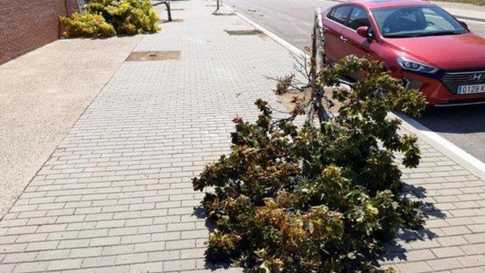 Pla general on es poden veure alguns arbres caiguts al carrer Roure de Lleida