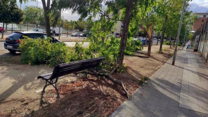 Pla obert on es poden veure diversos arbres afectats per la tempesta d'aquest divendres al vespre a la rambla de Corregidor Escofet