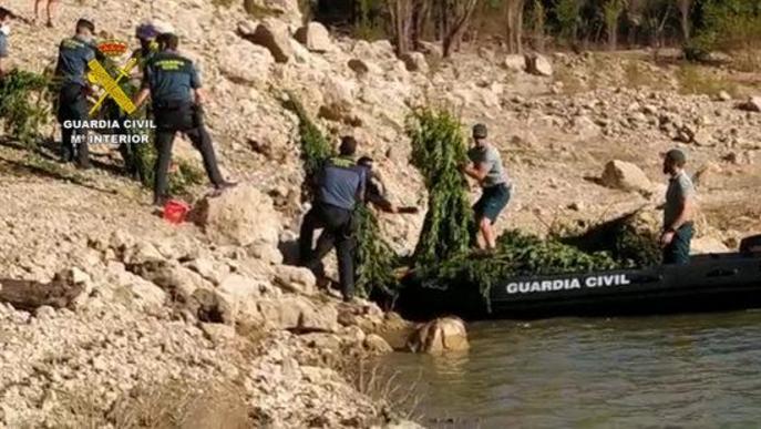 Pla obert on es veuen diversos agents de la Guàrdia Civil traslladant algunes de les plantes de marihuana decomissades d'una plantació situada al costat del pantà de Camarasa (