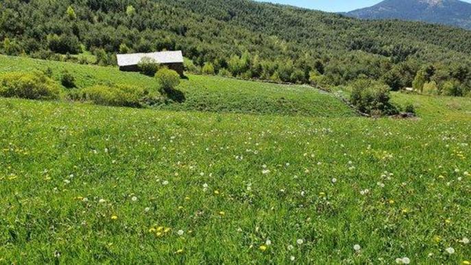 Pla de general d'un prat de dall del Pirineu on s'ha localitzat la planta 'Rhinanthus alectorolophus'