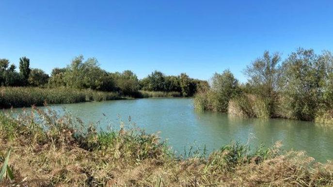 Pla obert on es pot veure una de les zones d'aguait a la part on entra l'aigua a l'estany d'Ivars i Vila-sana,