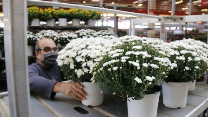 """Els floricultors confien en Tots Sants i Nadal per equilibrar els comptes després de """"l'estomacada"""" de primavera"""