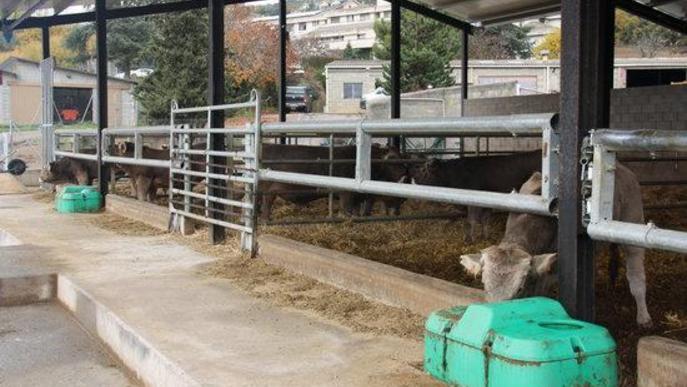 Pla general de les instal·lacions del centre de testatge de Bellestar de l'Escola Agrària del Pirineu, a Montferrer i Castellbò (Alt Urgell) on es veuen diversos vedells de raça Bruna dels Pirineus