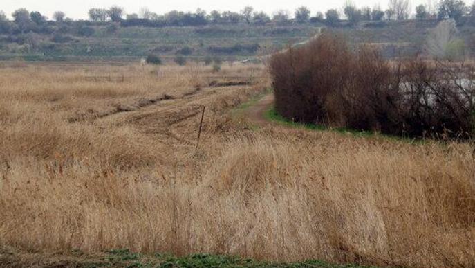 El reompliment de l'estany d'Ivars i Vila-sana continua amb la previsió d'arribar al mateix nivell d'abans del buidatge