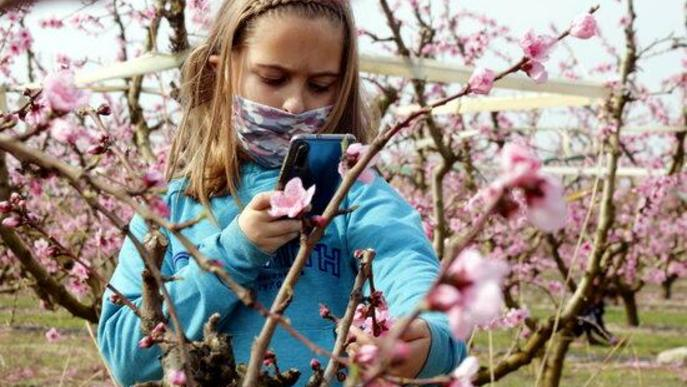 ⏯️ L'atracció de la floració a Alcarràs, amb una ruta guiada adaptada a la covid-19