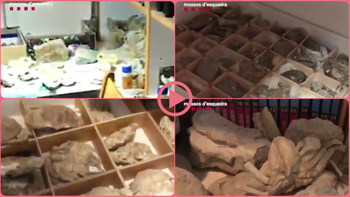 ⏯️ Intervenen fòssils mil·lenaris espoliats al llarg de vint-i-cinc anys